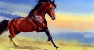 घोड़े पर निबंध Hindi Essay on Horse