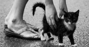 मेरी पालतू बिल्ली पर निबंध Hindi Essay on My Pet Cat