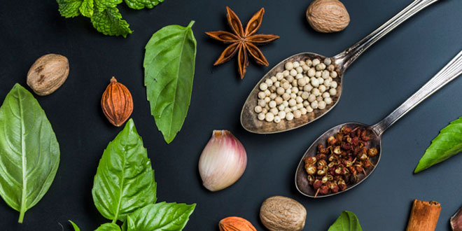 NCERT 7th Class (CBSE) Science: Nutrition in Plants - Quiz