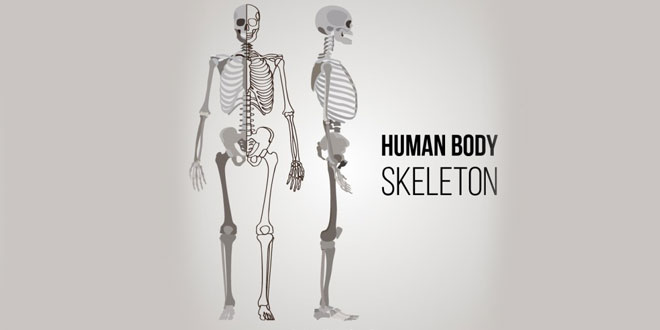 NCERT 5th Class (CBSE) Science: Skeletal System and Nervous System